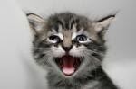 Kitty Jokes